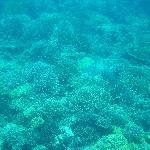 ティンバティンバ島