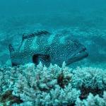 Owens reef