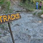 """A shallow bed of highly-eroded tracks at viewing area """"2""""."""
