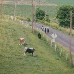 Amish children walking to church.