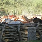 Corral with horses