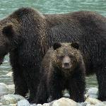 Grizzly n her cub