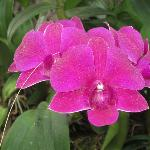 orchids, beautiful!