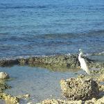Ave en las rocas de la playa