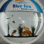 L' acquario nella hall