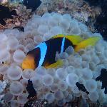 Snorkeling at old peers - nemo fish