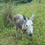 Mayfield Donkey