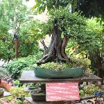 jardin muse de bonzai a Almunecar