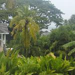 View from Verandah room, rainy day