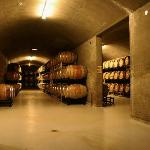 Burrowing Owl Barrel Room