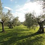 esterno con olivi