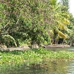 Ashtamudi Villas