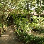 bungalows in the midst of green garden