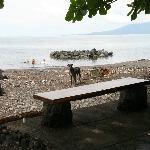 black and stony beach