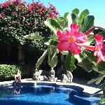 One of the Tranquil Pool Areas