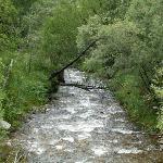Typischer Naturwald 25 km östlich von Ridder