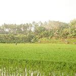 Прогулка по рисовым полям