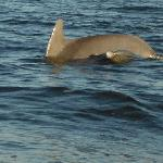 Mother & Baby Dolphins- 50 Yards Offshore