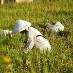 Schöner Blick auf die Reisfelder