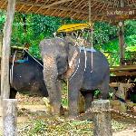 Elefantes antes del viaje