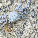 Crabs everywhere