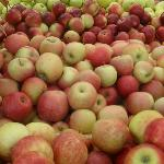 Apples ......so crisp and juicy