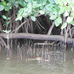 Croc spotting.