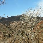 歩いている途中からの神山