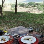 Elefant beim Lunch