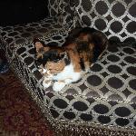 Your hotel cat!