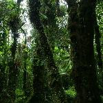 Jungle at Rara Avis near border Braullio NP