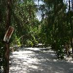 Paradisischer Garten
