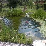 outside swim lake