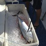 the first catch of the day, a bonito