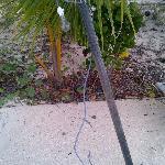 il palo della luce in spiaggia