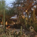 wonderful cactus garden