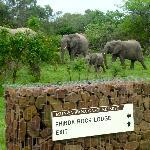 Elephants everywhere!