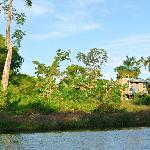 View while kayaking the Belize River
