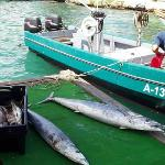 UNLOADING THE WAHOO