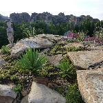 'Rock gardens'