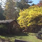 Exterior foliage
