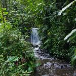 Waterfall on the Birdsong property