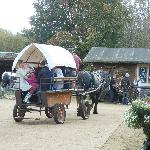 dorest heavy horse farm park