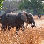 Elephants were in abundance, always great to watch