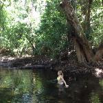 rainforest swimming
