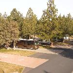 Mature Landscaping, Trees & Grass