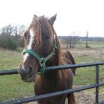 Hero, one of Irene's horses.