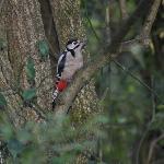 lovely woodpecker