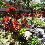 Beautiful plants in lobby and pool area.