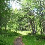 nel bosco sotto Les Suches